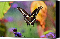 Karen Adams Canvas Prints - Giant Swallowtail Butterfly Photo-Painting Canvas Print by Karen Adams