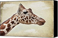 Camel Digital Art Canvas Prints - Giraffe Canvas Print by Svetlana Sewell