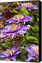 Flower Gardens Special Promotions - Glorious Purple Canvas Print by Claude Dalley