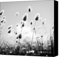 Tim Hester Canvas Prints - Grass Field Black and White Canvas Print by Tim Hester