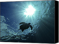 Brad Scott Canvas Prints - Guardian of the Sea Canvas Print by Brad Scott