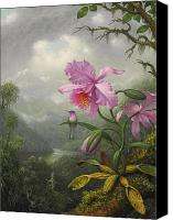 Humming Bird Canvas Prints - Hummingbird Perched on the Orchid Plant Canvas Print by Martin Johnson Heade
