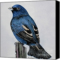 Bunting Painting Canvas Prints - Indigo Bunting Canvas Print by Sandra Maddox