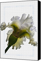 Flower Gardens Special Promotions - Iris 1 Canvas Print by Larry Goss