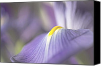 Mariola Szeliga Canvas Prints - Iris in Soft Light Canvas Print by Mariola Szeliga