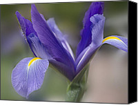 Mariola Szeliga Canvas Prints - Iris Canvas Print by Mariola Szeliga