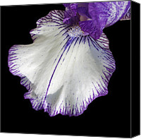 Ann Powell Canvas Prints - Iris Petal photograph Canvas Print by Ann Powell