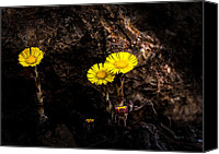 Wildflower Canvas Prints - It only takes a little bit of light Canvas Print by Bob Orsillo
