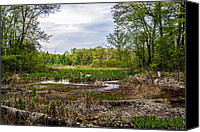 Ken Williams Canvas Prints - Jurassic  swamp Canvas Print by Ken Williams