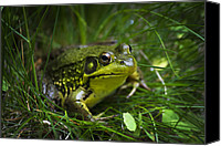 Frog Art Canvas Prints - Kiss My Happiness Frog Canvas Print by Christina Rollo