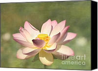 Lotus Blossoms Canvas Prints - Kissed by the Sun - Lotus Flower Canvas Print by Kim Hojnacki