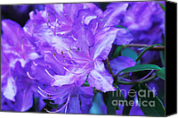 Cheryl Young Canvas Prints - Lavender Touch Canvas Print by Cheryl Young