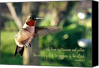 Ruby Throated Canvas Prints - Like a Dream   Inspirational Canvas Print by Bill Pevlor
