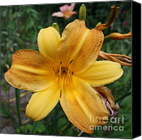 Flower Photography Canvas Prints - Lily in Large Canvas Print by Neal  Eslinger