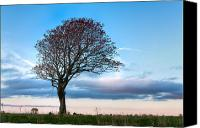Matt Dobson Canvas Prints - Lonely Tree At Dusk Canvas Print by Matt Dobson
