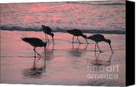 Long Pyrography Canvas Prints - Long Billed Dowitcher Canvas Print by Kent LeFevre