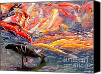 Mary Deal Canvas Prints - Lunch Time at the Koi Pond Canvas Print by Mary Deal