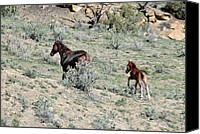 Wildhorses Canvas Prints - Mare and Colt Wildhorses Canvas Print by Margaret  Slaugh
