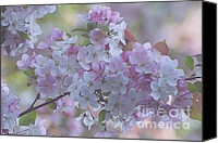 Blossom Special Promotions - May Blossoms Canvas Print by Chris Holmes