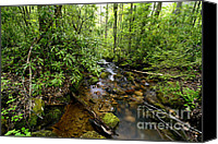 Rushing Mountain Stream Canvas Prints - Monongahela Forest Spring Canvas Print by Thomas R Fletcher