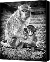 Asian Canvas Prints - Mother and Baby Monkey Black and White Canvas Print by Adam Romanowicz