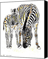 Zebra Pastels Canvas Prints - Mountain Zebra - Equus zebra Canvas Print by Kurt Tessmann