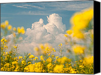 Yellow Flower Canvas Prints - Mt Cloud Canvas Print by Davorin Mance
