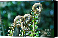 Cheryl Young Canvas Prints - New Life Canvas Print by Cheryl Young