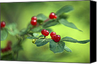 Red Berries Canvas Prints - Ominous Berries Canvas Print by Christina Rollo