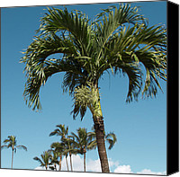 Sharon Mau Canvas Prints - Palm trees and blue sky Canvas Print by Sharon Mau