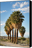Arid Canvas Prints - Palm trees Canvas Print by Jane Rix