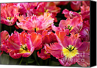 Jenny Rainbow Canvas Prints - Parrot Tulips. The Tulips of Holland Canvas Print by Jenny Rainbow