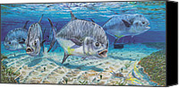 Grouper  Canvas Prints - Passing Through Canvas Print by Carey Chen