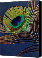 Ann Powell Canvas Prints - Peacock Feather Canvas Print by Ann Powell