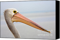 Waterfowl Canvas Prints - Pelican Profile Canvas Print by Mike  Dawson