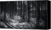 Hike Canvas Prints - Pine Grove Canvas Print by Scott Norris
