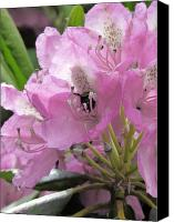 Mountain Special Promotions - Pink Rhododendron Canvas Print by Michael Creamer