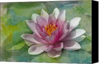 Pink Flower Canvas Prints - Pink Water Lily Canvas Print by Rebecca Cozart