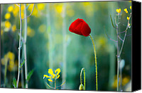 Rapeseed Canvas Prints - Poppy Canvas Print by Evgeni Dinev