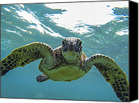 Brad Scott Canvas Prints - Posing Sea Turtle Canvas Print by Brad Scott