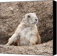 Brown Special Promotions - Prairie Dog Canvas Print by Elizabeth Lock