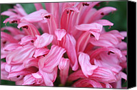 Garden Flowers Special Promotions - Pretty Pink Canvas Print by Ange Sylvestri