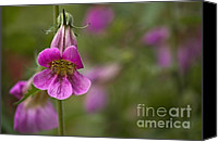 Peggy J Hughes Canvas Prints - Pretty Pink Penstemon Canvas Print by Peggy J Hughes