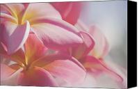 Sharon Mau Canvas Prints - Pua Melia Ke Aloha Keanae Dreams Canvas Print by Sharon Mau