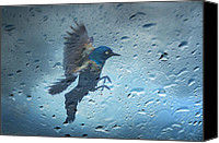 Buy Photos Online Canvas Prints - Rainy Day Canvas Print by Steven  Michael