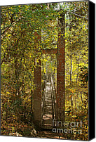 Vegetation Canvas Prints - Ravine Gardens State Park in Palatka FL Canvas Print by Christine Till