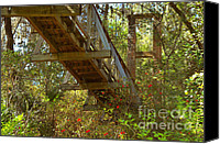 Lush Canvas Prints - Ravine State Gardens Palatka Florida Canvas Print by Christine Till