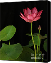 Featured Sculpture Canvas Prints - Red Lotus Canvas Print by Dodie Ulery
