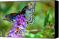 Karen Adams Canvas Prints - Red Spotted Purple Butterfly PhotoPainting Canvas Print by Karen Adams