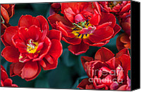 Jenny Rainbow Canvas Prints - Red Tulips. The Tulips of Holland Canvas Print by Jenny Rainbow